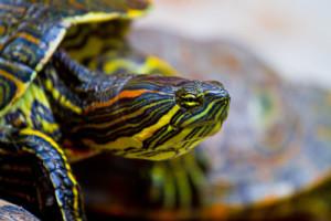Turtle-Cypress-Spring-Holmes-Creek
