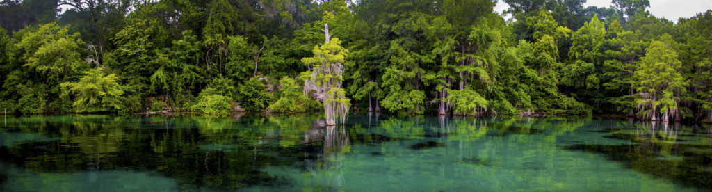 Merritt Mills Pond Eco Tours